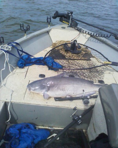 Badin lake blue catfish